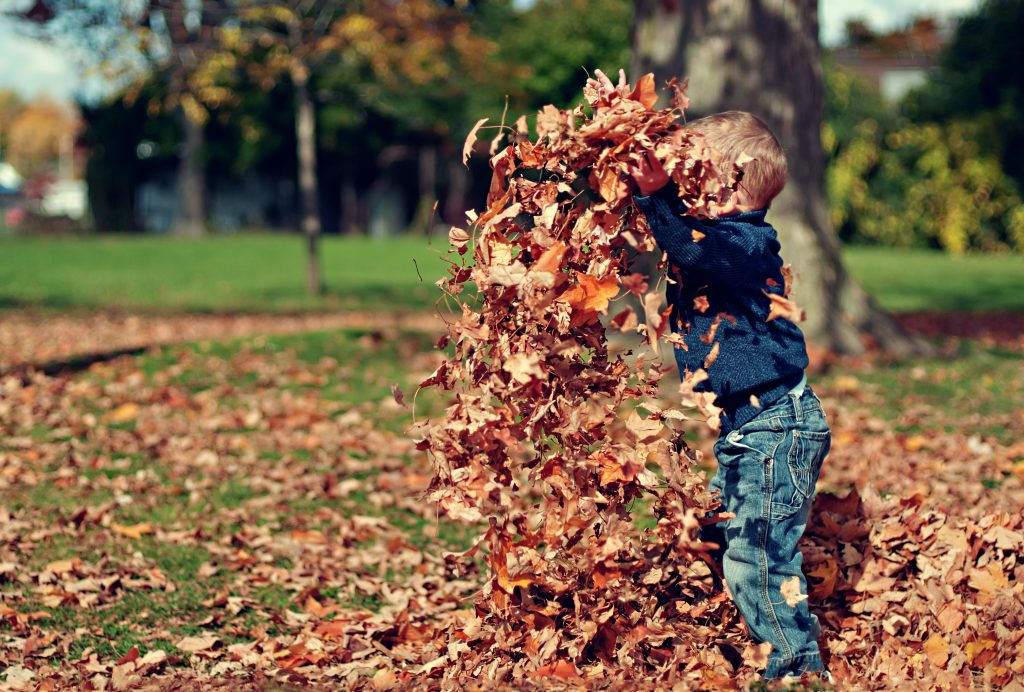Child playing in leaves